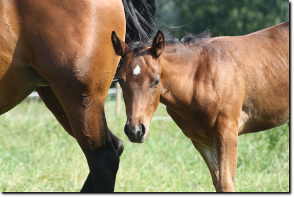 miss taco b poco x wee lenas jac wee golden nugget quarter horse ...